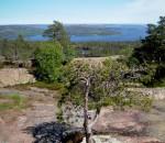 Skuleskogen i Höga Kusten