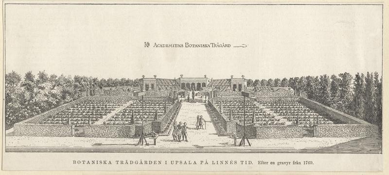 Linneträdgården i Uppsala på Linnées tid - Uppsala universitetsbibliotek