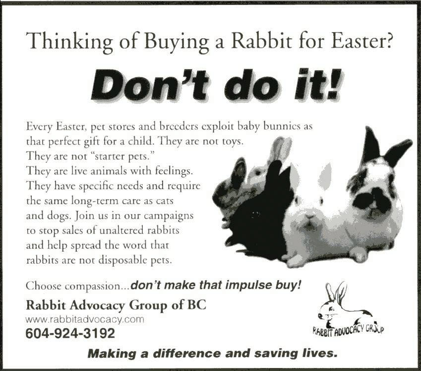 Don't buy a rabbit
