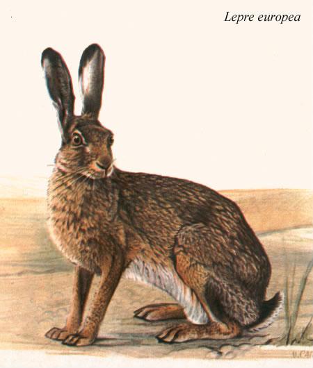 Rabbit school u i guardiani dell uovo d oro u trailer ufficiale