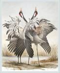 Dag Peterson - Dancing cranes - 2000 - LINK