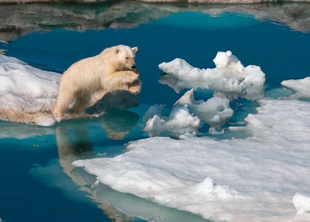 Isbjörn - LINK