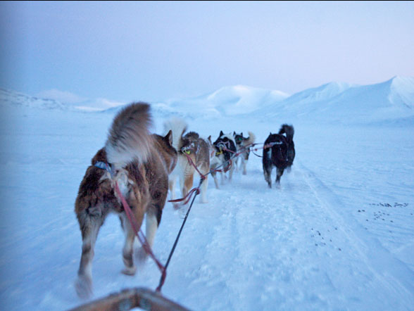 Svalbard - Cani da slitta